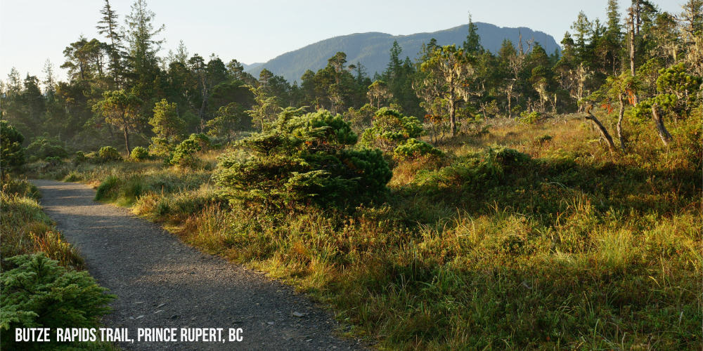Change in vegetation along the Butze Rapids Trail in Prince Rupert BC #travelcanada #explorebc