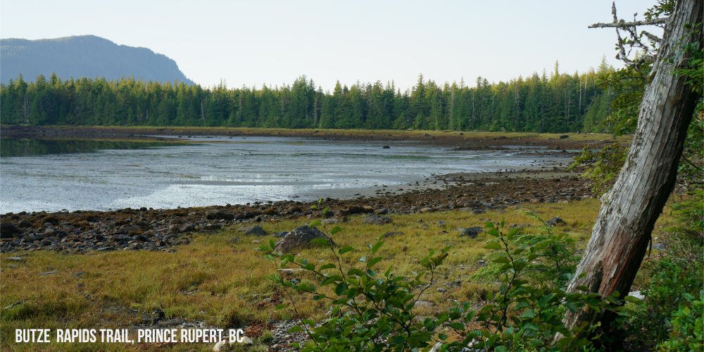 Low Tide at Grassy Bay, Prince Rupert