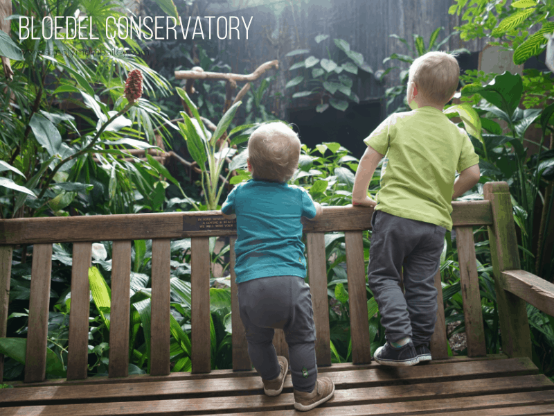 Bloedel Conservatory for a Toddler-Friendly Weekend in Vancouver
